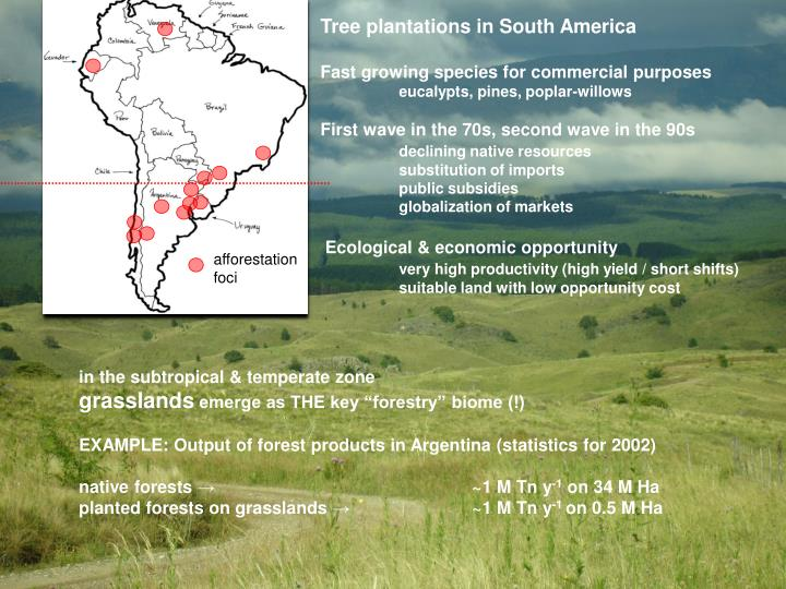 Tree plantations in South America