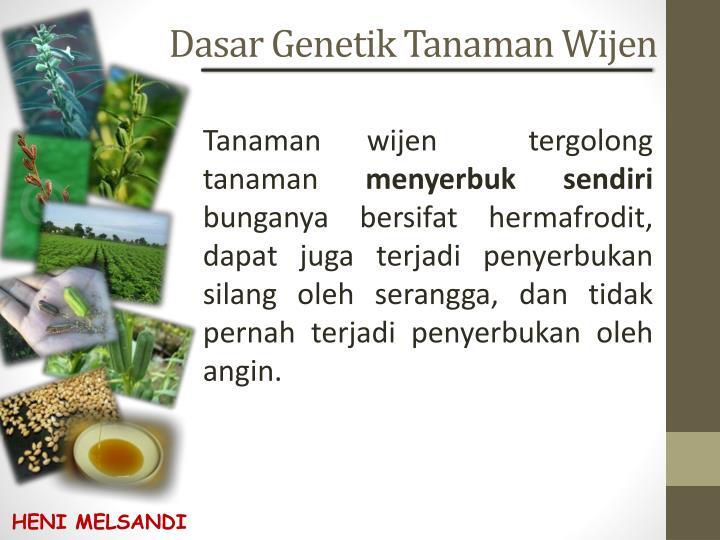 Dasar Genetik Tanaman Wijen