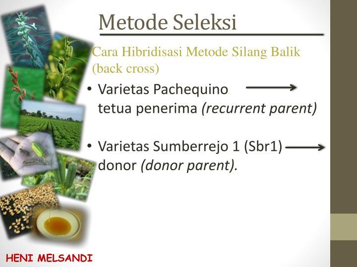 Metode Seleksi