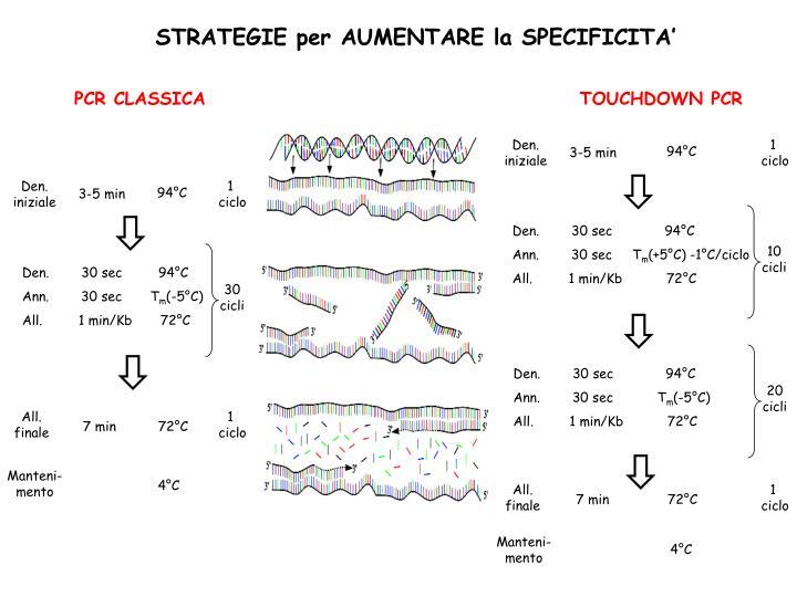 PCR CLASSICA