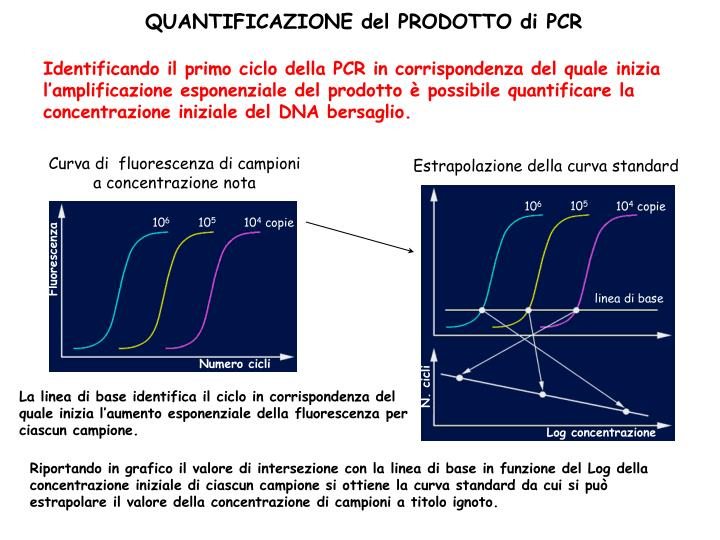 Identificando il primo ciclo della PCR in corrispondenza del quale inizia l'amplificazione esponenziale del prodotto è possibile quantificare la concentrazione iniziale del DNA bersaglio.