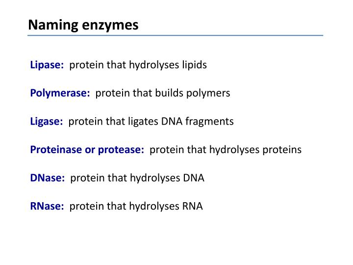 Naming enzymes