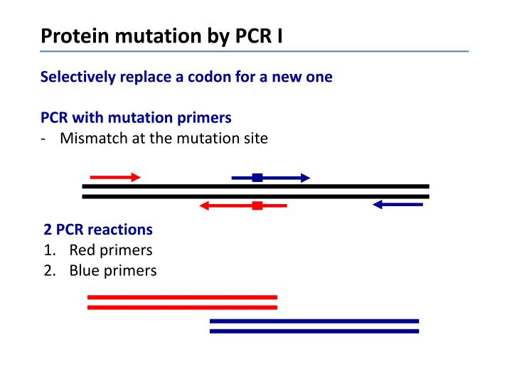 Protein mutation by PCR I
