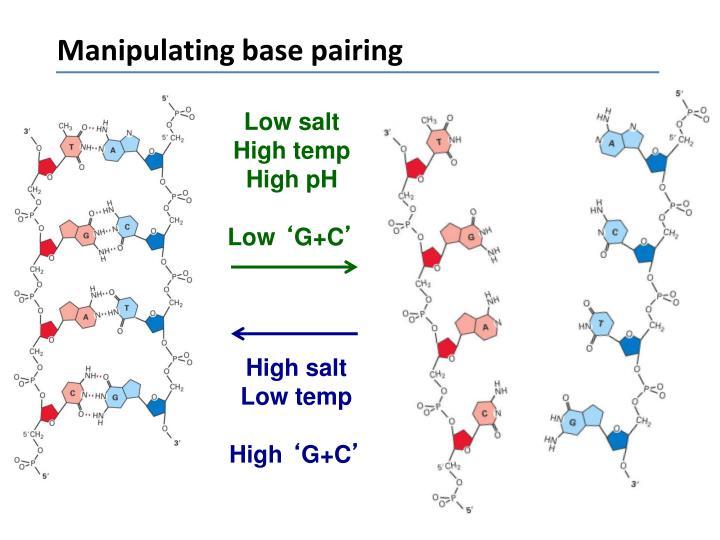 Manipulating base pairing