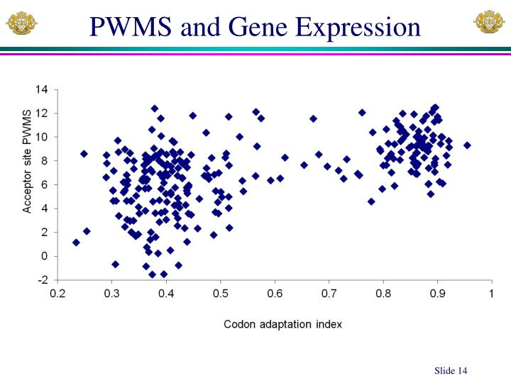 PWMS and Gene Expression