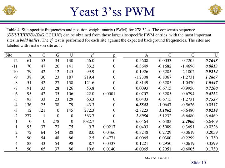 Yeast 3'ss PWM