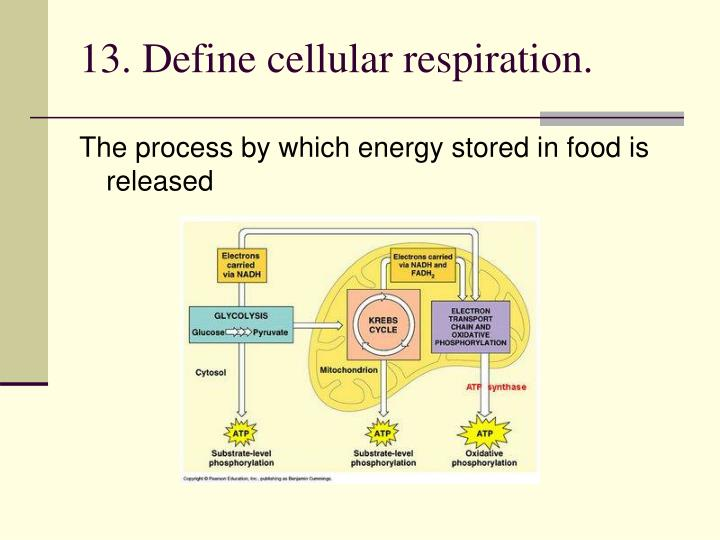 13. Define cellular respiration.