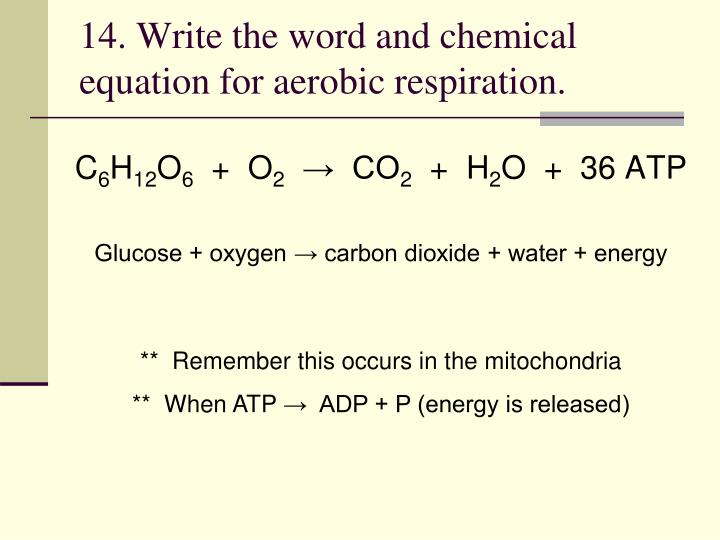 14. Write the word and chemical equation for aerobic respiration.