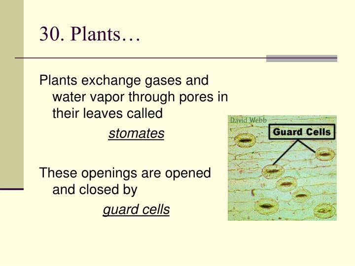 30. Plants…