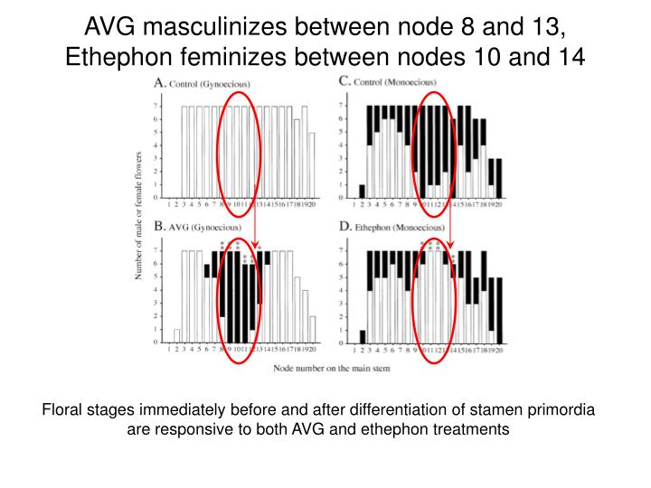 AVG masculinizes between node 8 and 13, Ethephon feminizes between nodes 10 and 14