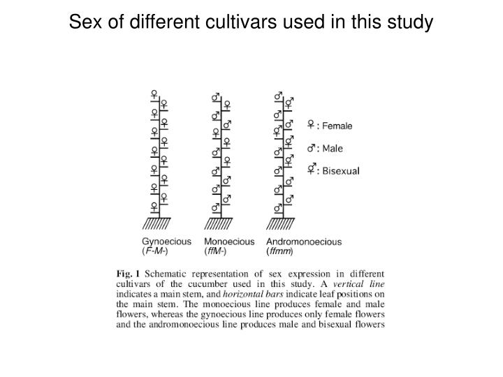 Sex of different cultivars used in this study