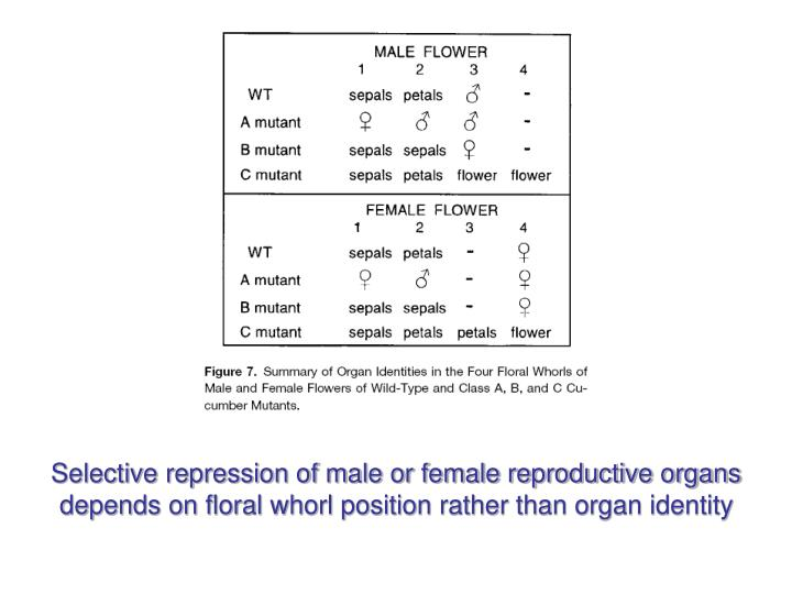 Selective repression of male or female reproductive organs depends on floral whorl position rather than organ identity