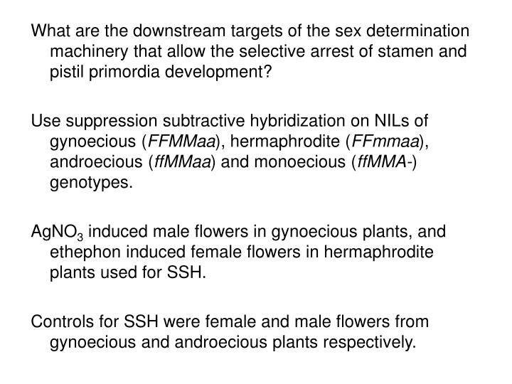 What are the downstream targets of the sex determination machinery that allow the selective arrest of stamen and pistil primordia development?