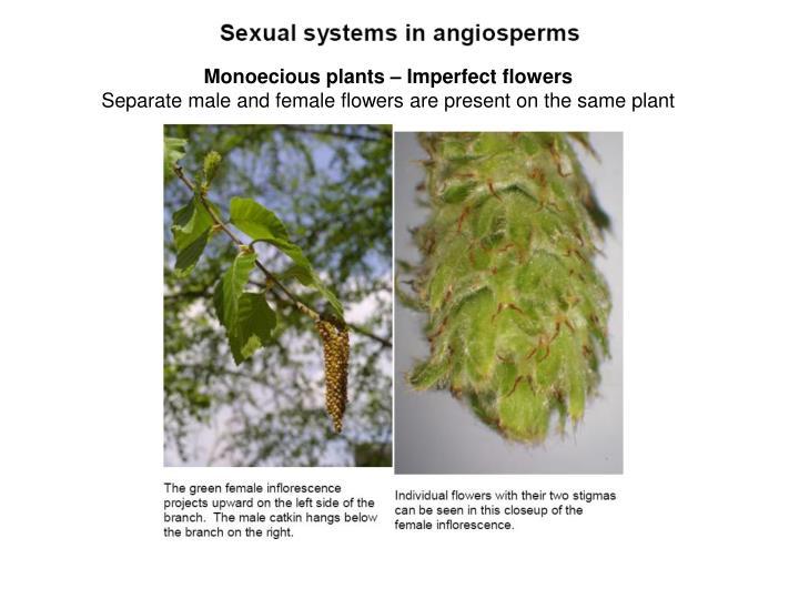 Monoecious plants – Imperfect flowers