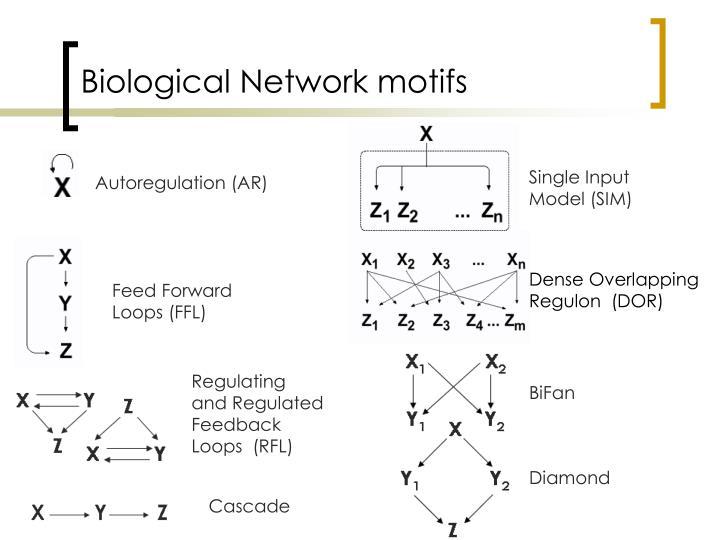 Biological Network motifs