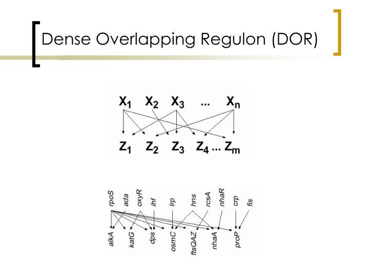 Dense Overlapping Regulon (DOR)
