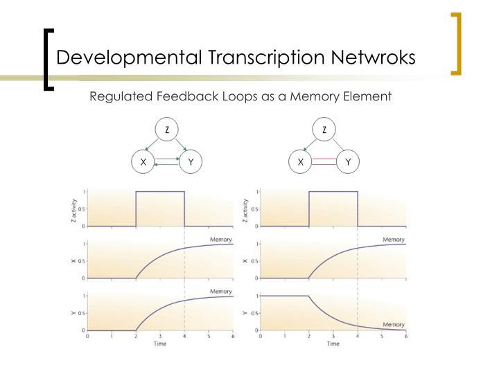 Developmental Transcription Netwroks
