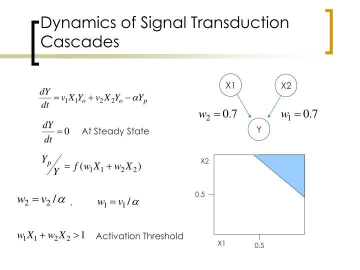 Dynamics of Signal Transduction Cascades