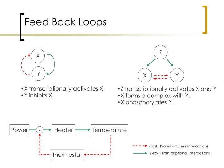 Feed Back Loops
