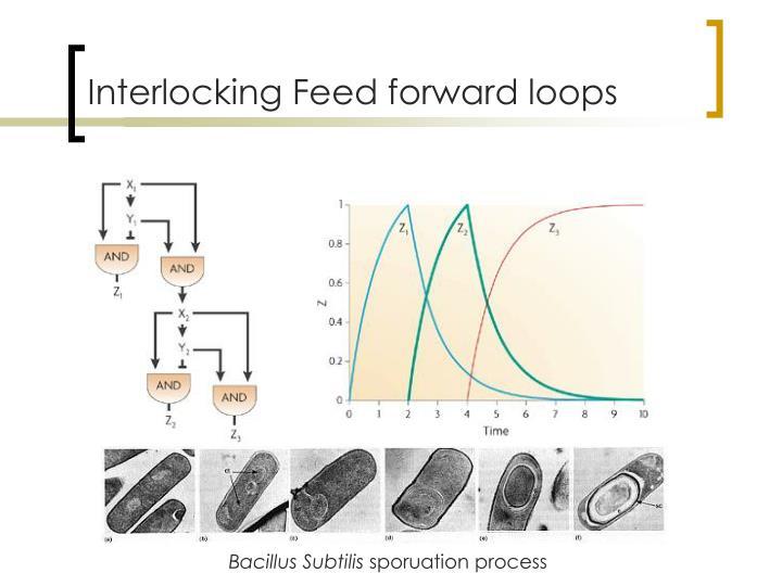 Interlocking Feed forward loops