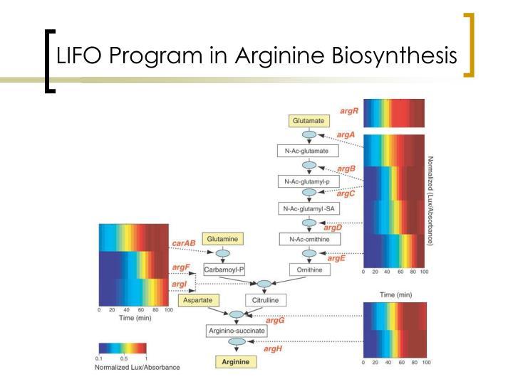 LIFO Program in Arginine Biosynthesis
