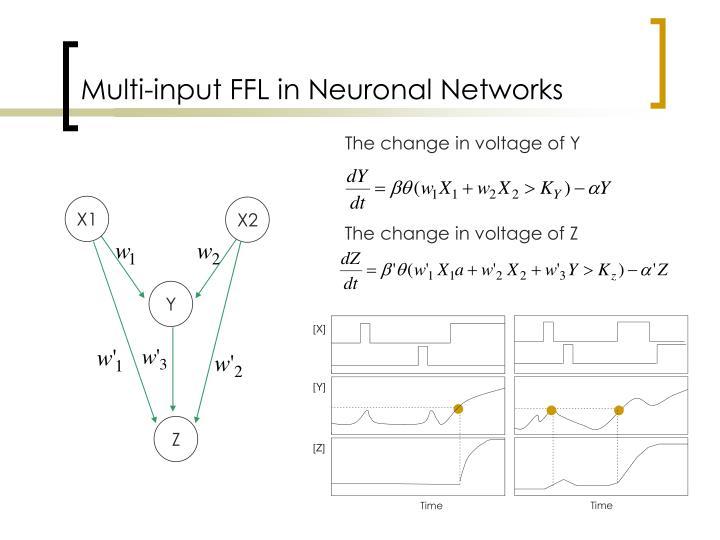 Multi-input FFL in Neuronal Networks