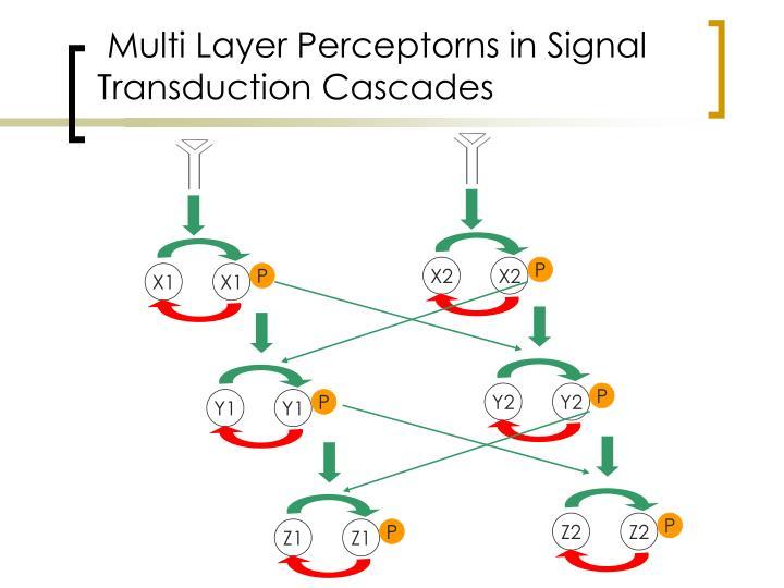 Multi Layer Perceptorns in Signal Transduction Cascades