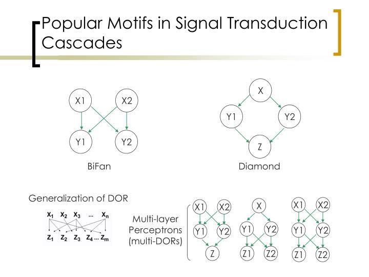 Popular Motifs in Signal Transduction Cascades