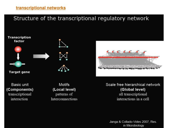 transcriptional networks
