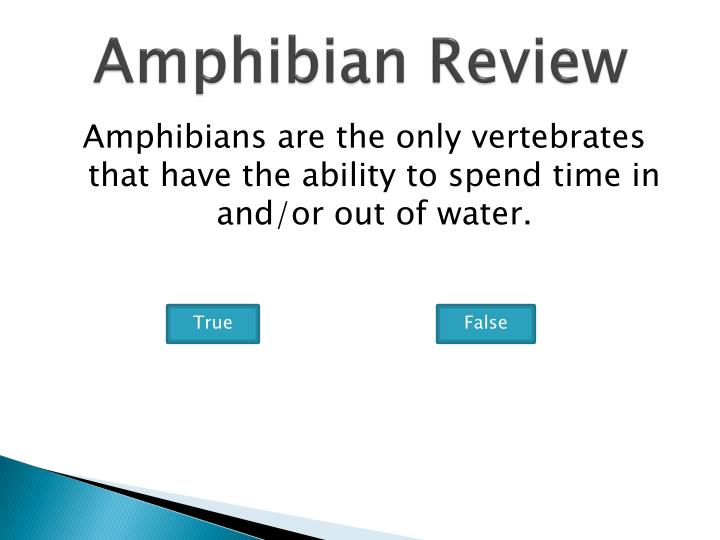 Amphibian Review