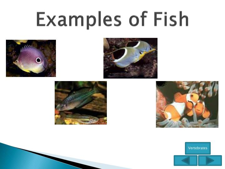 Examples of Fish