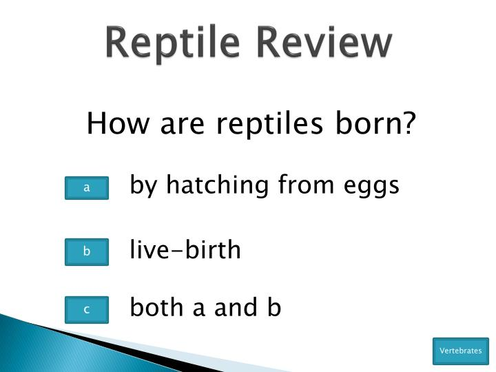Reptile Review