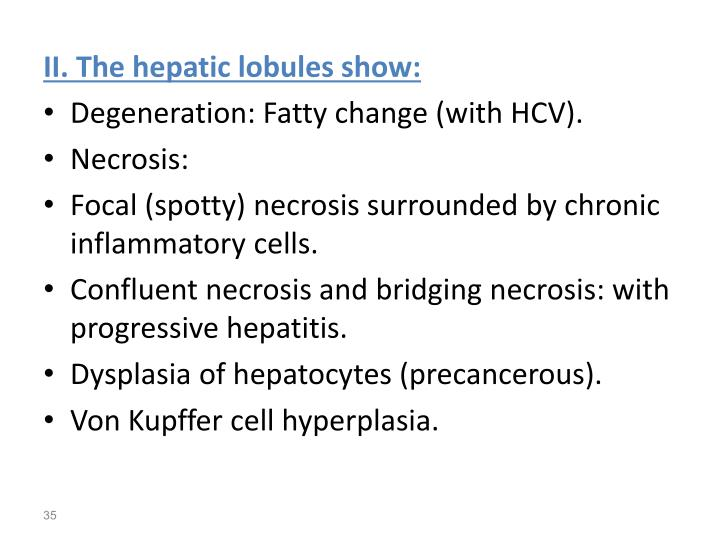 II. The hepatic lobules show: