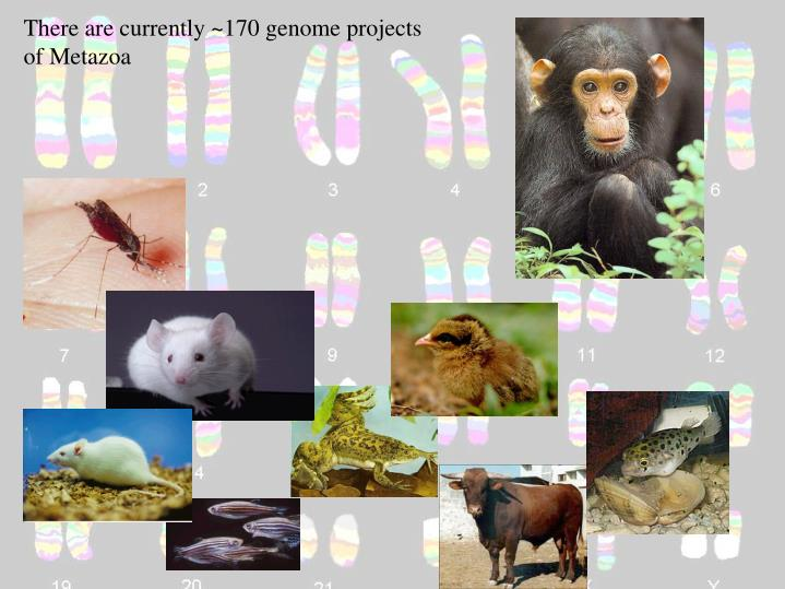 There are currently ~170 genome projects