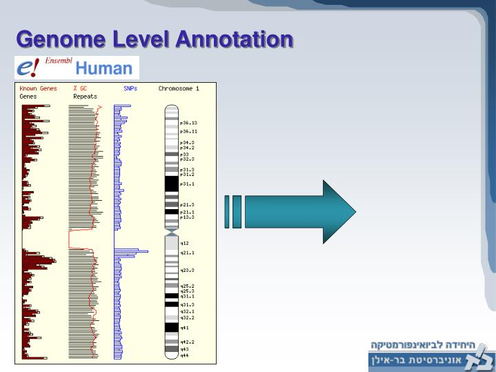 Genome Level Annotation