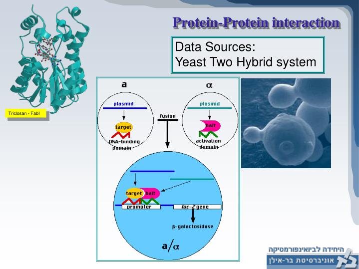 Protein-Protein interaction