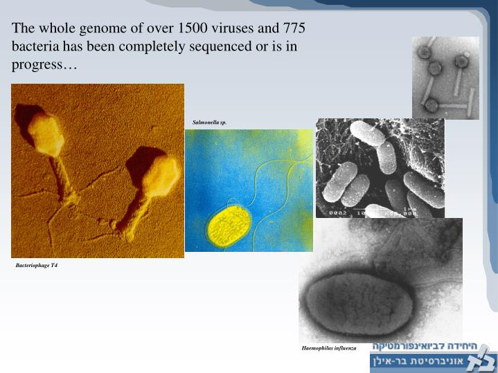 The whole genome of over 1500 viruses and 775 bacteria has been completely sequenced or is in progress…