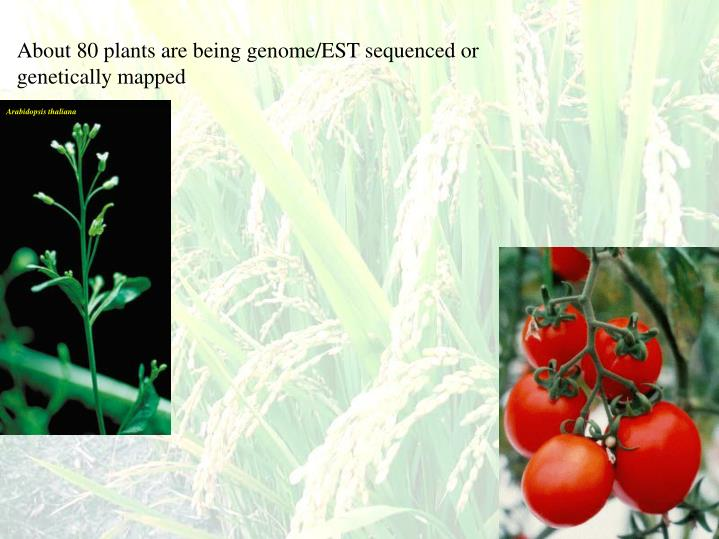 About 80 plants are being genome/EST sequenced or genetically mapped