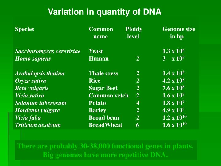 Variation in quantity of DNA