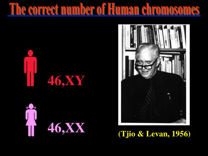 The correct number of Human chromosomes