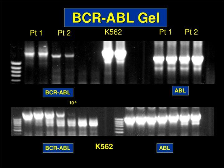 BCR-ABL Gel