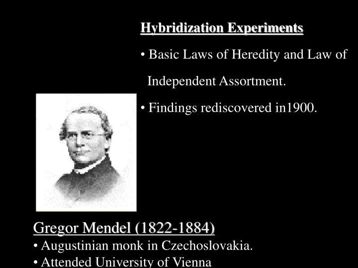 Hybridization Experiments