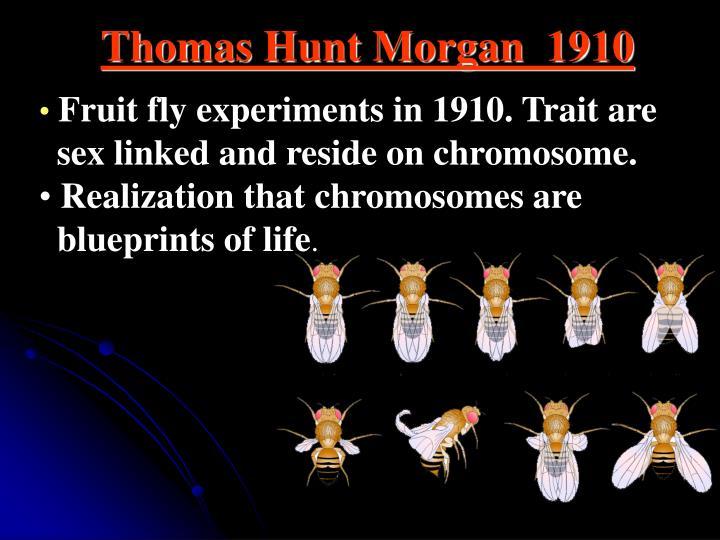 Thomas Hunt Morgan  1910