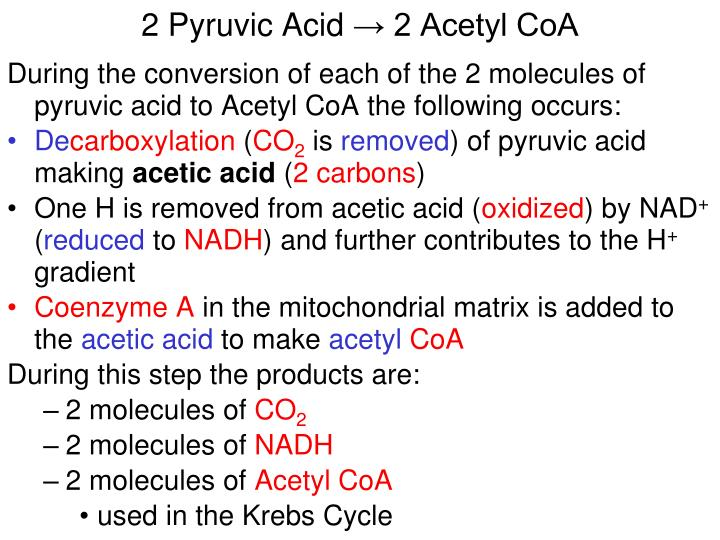 2 Pyruvic Acid
