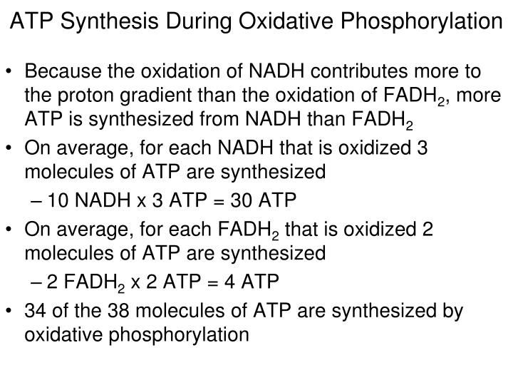 ATP Synthesis During Oxidative Phosphorylation