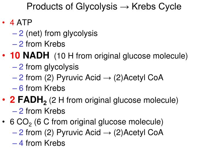 Products of Glycolysis