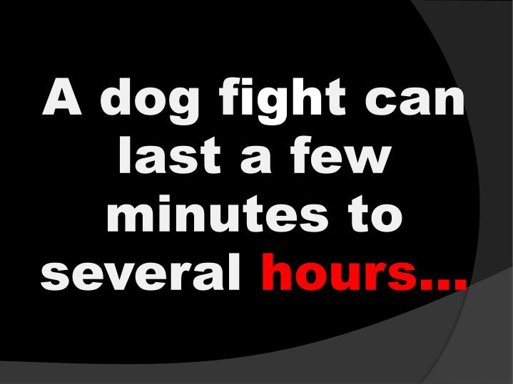 A dog f igh t can last a few minutes to several hours