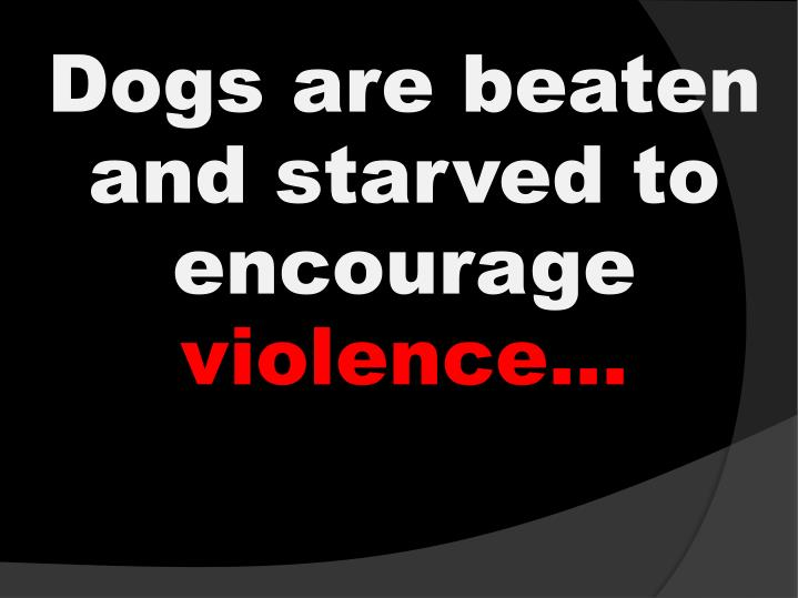 Dogs are beaten and starved to encourage