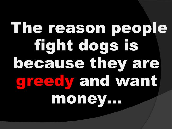 The reason people fight dogs is because they are