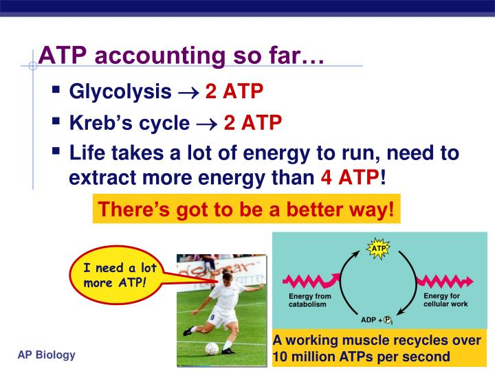 ATP accounting so far…